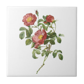 Vintage Flowers Floral Red Rose of Love by Redoute Tile