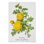 Vintage Flowers Floral, Yellow Roses by Redoute Poster