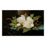 Vintage Flowers, Giant Magnolias by Martin Heade Poster