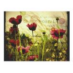Vintage flowers Postcard