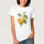 Vintage Food Fruit, Apricot Peach by Redoute Tshirts