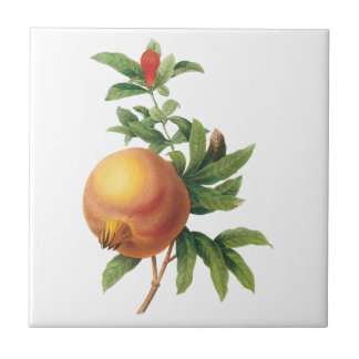 Vintage Food Fruit, Pomegranate by Redoute Tile