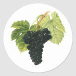 Vintage Food Fruit, Red Wine Organic Grape Cluster Classic Round Sticker