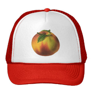 Vintage Food Fruit, Ripe Organic Peach with Leaf Cap