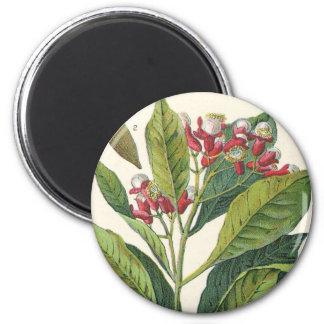 Vintage Food Herbs Spices, Botany of Cloves 6 Cm Round Magnet