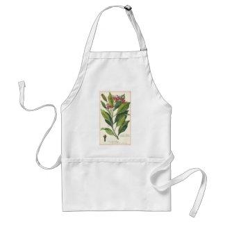 Vintage Food Herbs Spices, Botany of Cloves Standard Apron