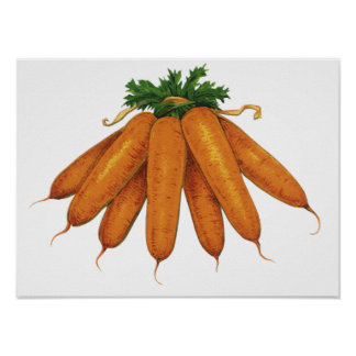 Vintage Food, Vegetables; Bunch of Organic Carrots Print