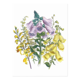 Vintage Foxglove Illustration Postcard