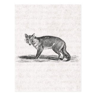 Vintage Foxy Fox Illustration - 1800's Foxes Postcard