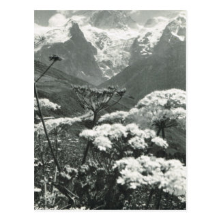 "Vintage France, Chamonix ""Mont Blanc"" Postcard"