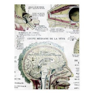 Vintage French Anatomy Postcard
