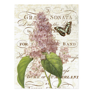 Vintage French Botanical lilac postcard