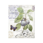 Vintage French Botanical Plum stretched canvas Canvas Print