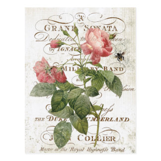 Vintage French Botanical rose postcard