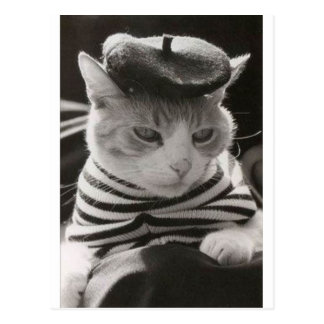 Vintage french cat postcard