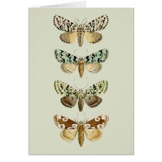 Vintage French Moths Card