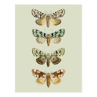 Vintage French Moths Postcard