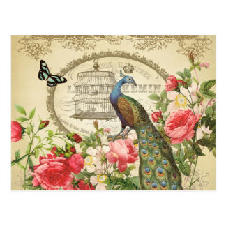 Vintage French Shabby Chic Peacock Postcard