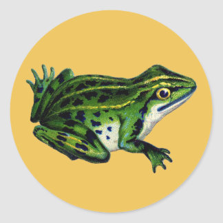 Vintage Frog Illustration Stickers