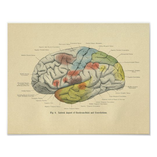 Vintage Frohse Anatomical Brain Sensory Areas Poster
