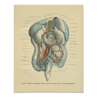 Vintage Frohse Anatomy Intestines Organs Poster