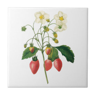 Vintage Fruit Berries Food Strawberries by Redoute Small Square Tile