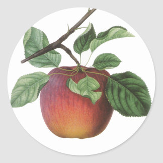 Vintage Fruit Stickers