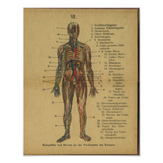 Vintage German Anatomy Print Arteries Nerves