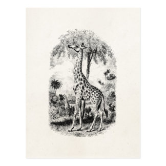 Vintage Giraffe Personalized Animal Illustration Postcard