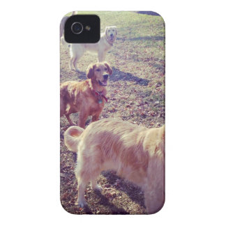 Vintage golden retriever dogs lined up iPhone 4 Case-Mate cases