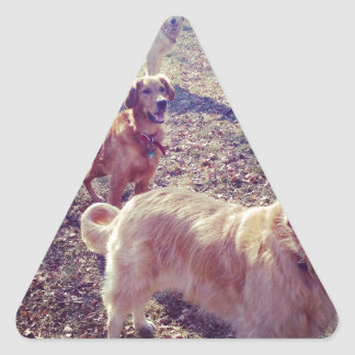 Vintage golden retriever dogs lined up triangle sticker