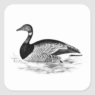 Vintage Goose Illustration -1800's Geese Template Square Sticker