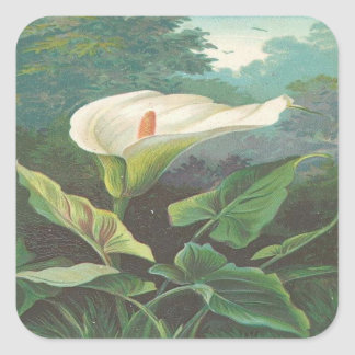 Vintage, Gorgeous White Flower Square Sticker