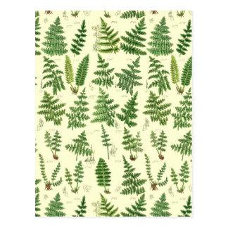 Vintage Green Leafy Plants Postcard