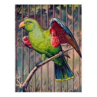 Vintage Green Parrot Print Postcard