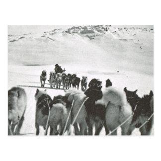Vintage Greenland, dog teams in the snow Postcard