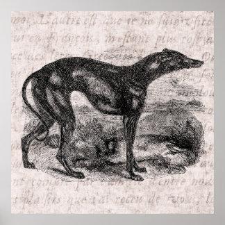 Vintage Greyhound Dog 1800s Greyhounds Dogs Poster