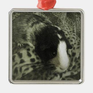 Vintage guinea pig photograph Silver-Colored square decoration