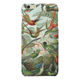 Vintage Haeckel Hummingbirds iPhone 6 Plus Case