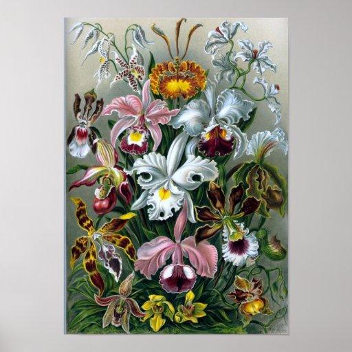 Vintage Haekel Botanical Poster