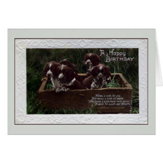 Vintage happy birthday springer spaniel puppies cards