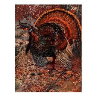 Vintage Happy Thanksgiving Turkey Postcards