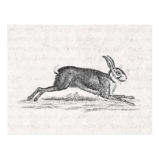 Vintage Hare Bunny Rabbit 1800s Illustration Postcard