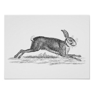 Vintage Hare Bunny Rabbit 1800s Illustration Poster