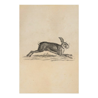 Vintage Hare Bunny Rabbit 1800s Illustration Print