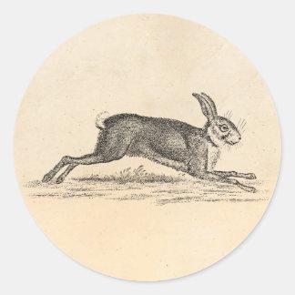 Vintage Hare Bunny Rabbit 1800s Illustration Round Sticker