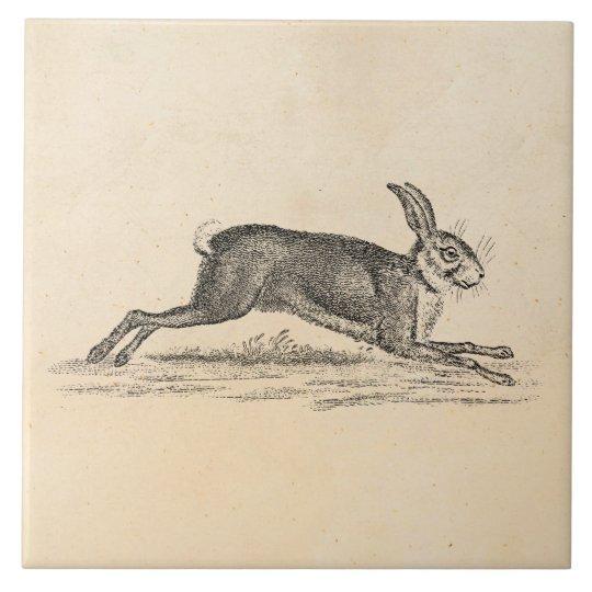 Vintage Hare Bunny Rabbit 1800s Illustration Tile