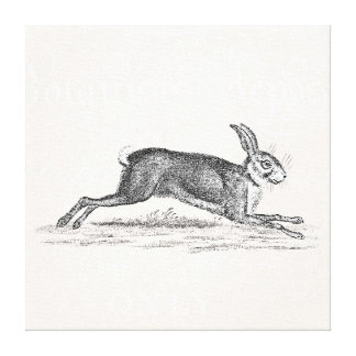 Vintage Hare Bunny Rabbit Illustration - Rabbits Canvas Print