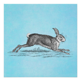 Vintage Hare Bunny Rabbit Illustration - Rabbits Poster