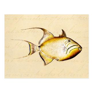 Vintage Hawaiian Trigger Fish Customized Template Postcard